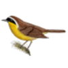 Yellowthroat (Common)