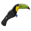 Toucan (Keel-billed)