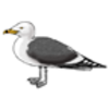 Gull (California)