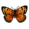 Butterfly (Pearl Crescent)