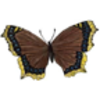 Butterfly (Mourning Cloak)