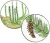 Plant Science, Plant Structure, Classification, Pollination, Photosynthesis, Seed Dispersal