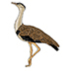 Bustard (Great Indian)