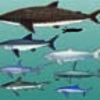 About Sharks & Rays (Cartilaginous Fishes)