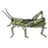 Entomology - Study of Insects